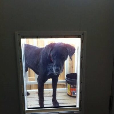 Super Large Dog Door For Timber Supplied Installed Adelaide