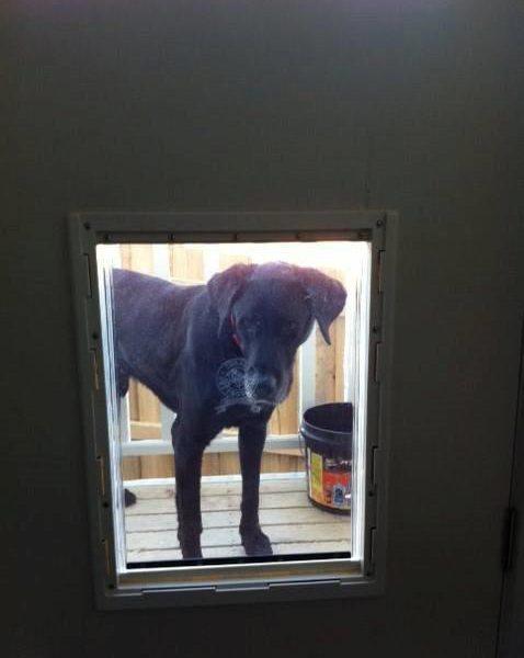 Large Dog Door For Wood Supplied Installed Adelaide Pet Doors